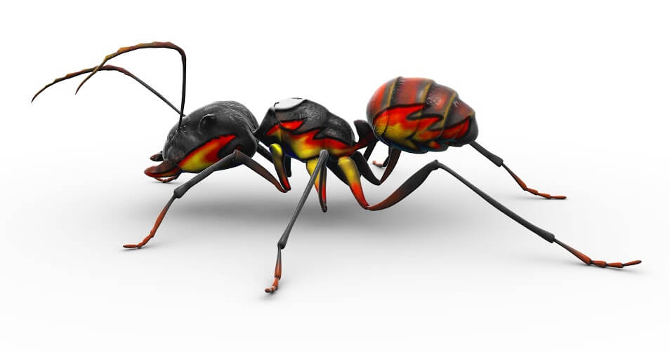 Fire Ants! The Most Effective Fire Ant Control Methods