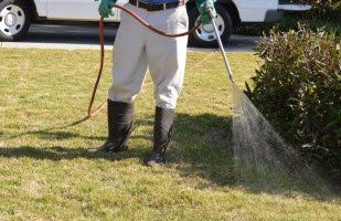 How Fungicide Treatment Helps Prevent Dollar Spot Disease