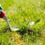 Avoid Killing 2 Birds with 1 Stone: How to Get Rid of Weeds Not Grass