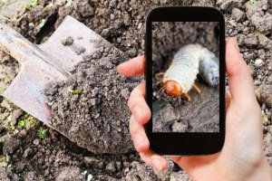 The 3 Biggest Blunders To Avoid When It Comes to A Grub Problem In Your Lawn