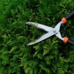 3 Ways Winter Tree And Shrub Care Make Your Trees and Shrubs Lush In The Spring