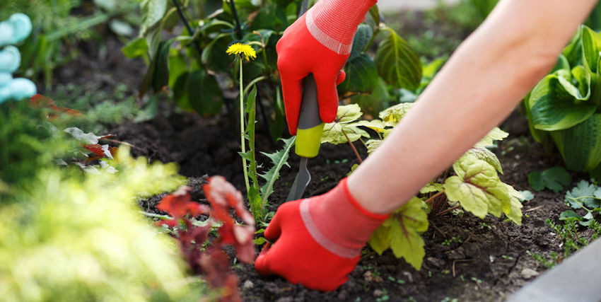 Is It Too Early for Garden Weed Control?