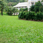 Lawn Services in Flowery Branch, Georgia