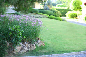 McDonough, Georgia lawn services