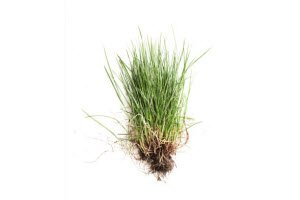 A Fescue Fall Seeding Plan for a Beautiful Lawn All Year