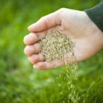 Can You Plant Grass Seed in the Fall?