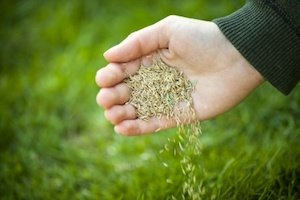 how to plant grass seed in fall