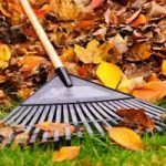 Fall Lawn Care Tips for Bermuda Grass