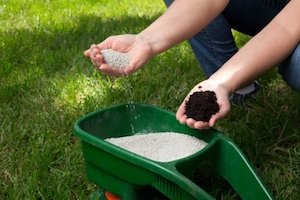 best weed control for lawn