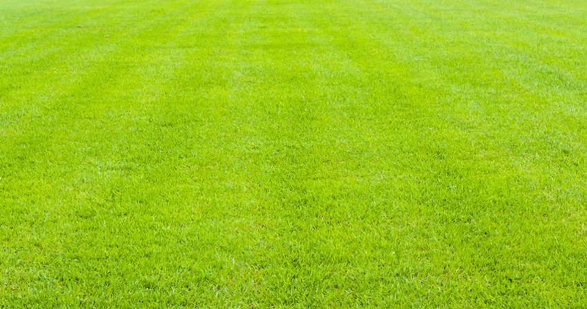 What Does Applying Lime to Your Lawn Really Do?