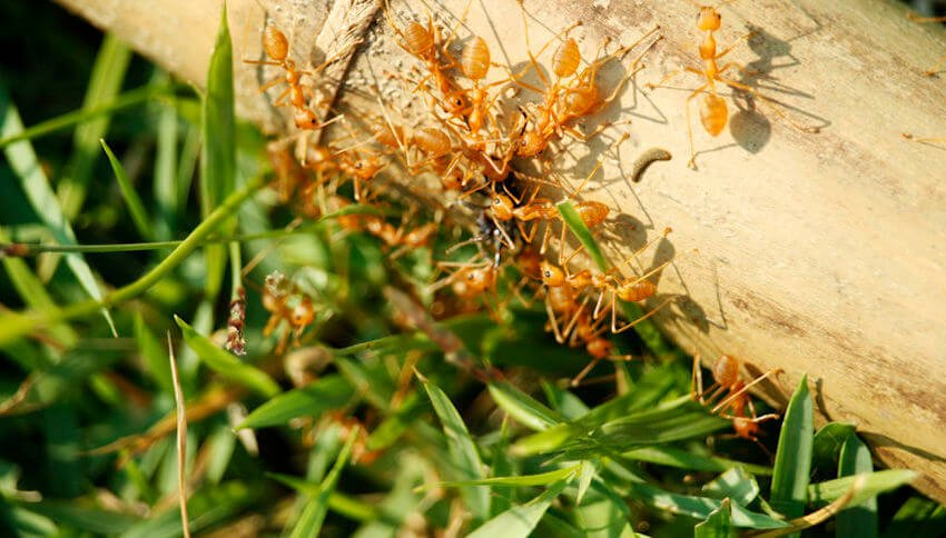 Ouch! How to Get Rid of Fire Ants This Summer