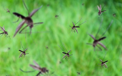 Is It Too Late for Residential Mosquito Control?
