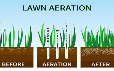 Why Fall Aeration and Over Seeding Is Important for Fescue Grass