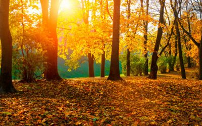 If Pumpkin Spice Lattes Are Brewing, It's Time To Figure Out The Best Lawn Fertilizer For Fall