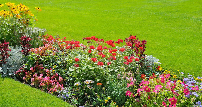 Weed Control in Flower Beds