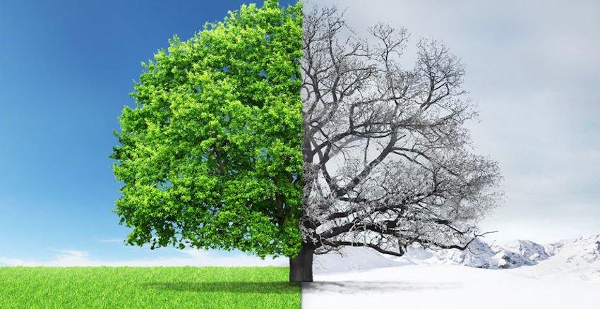 winter tree and shrub care